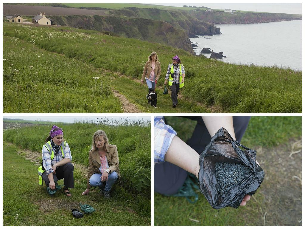 The lethal blue poison was found on a coastal walk near St Cyrus