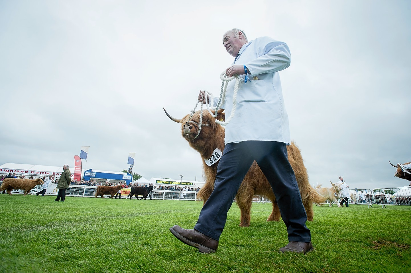 Highland Cattle judging at the Highland Show