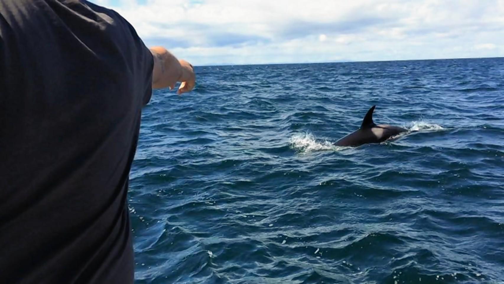 The Buckie family feed the killer whales off the Moray coast
