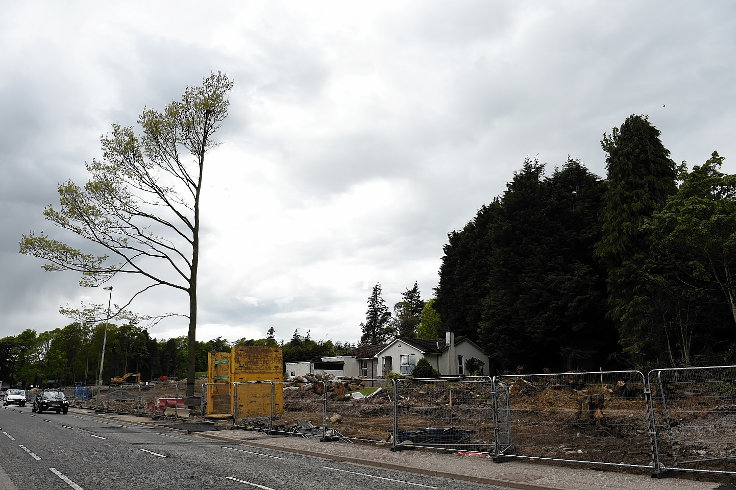 A bird's nest has hampered tree-felling work on the AWPR. Picture by Kenny Elrick