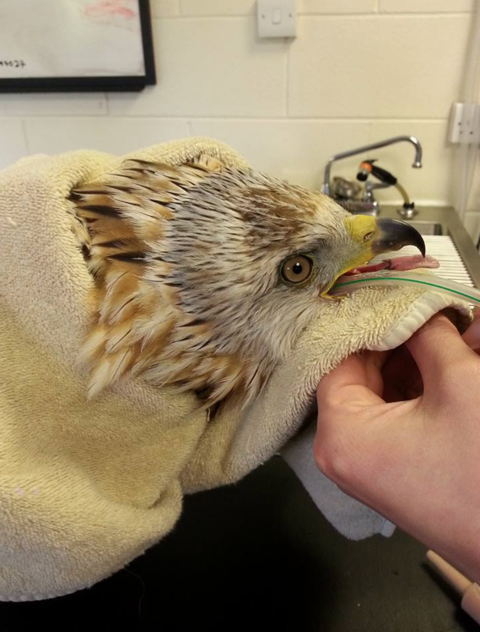 The bird was found hanging from a tree in the Angus Glens