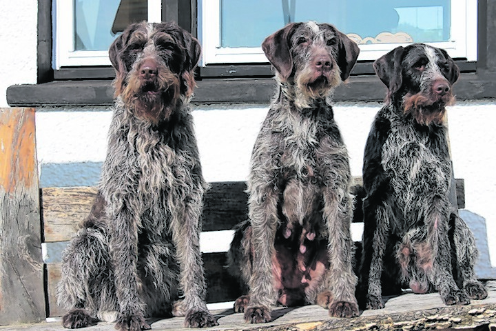Here is mum Jeager (centre), with daughter Hex (left) and son Mauser (right). They live with Andy Lawton in Carradale.
