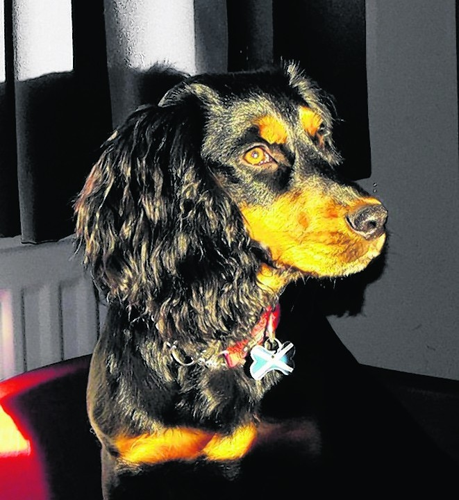 This is Skye and she lives with the Borland clan in Stonehaven.