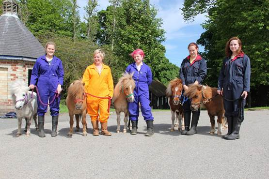 The ponies that will be taking part
