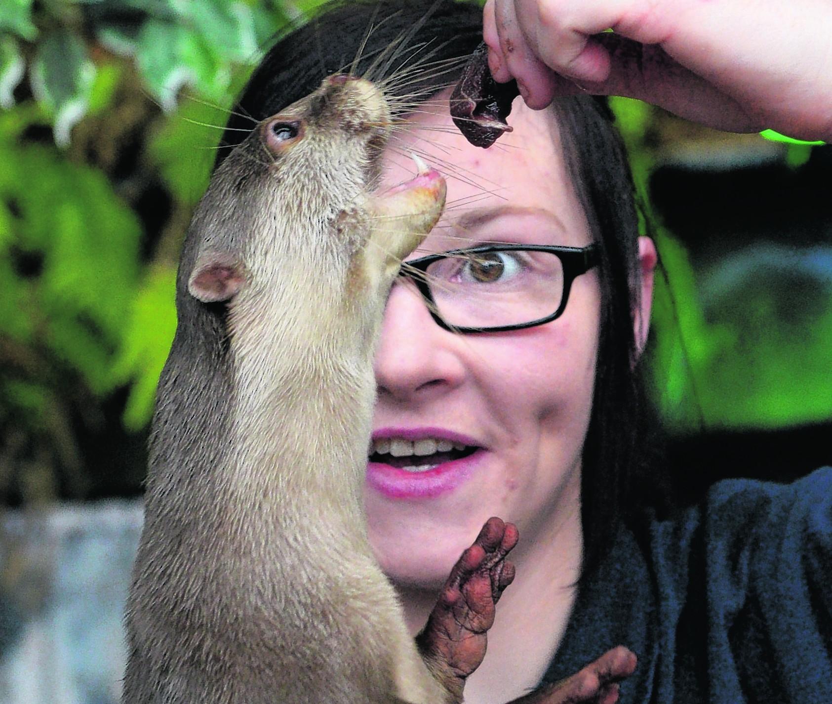 Robyn Hunter feeding one of the otters at Loch Lomond Sea Life Aquarium