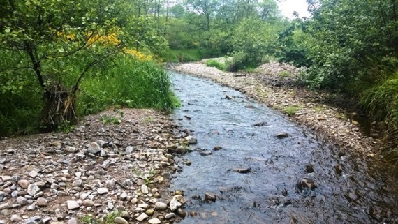 The Speyburn malthouse teamed up with conservation group, the Spey Foundation, to devise ways of increasing fish numbers