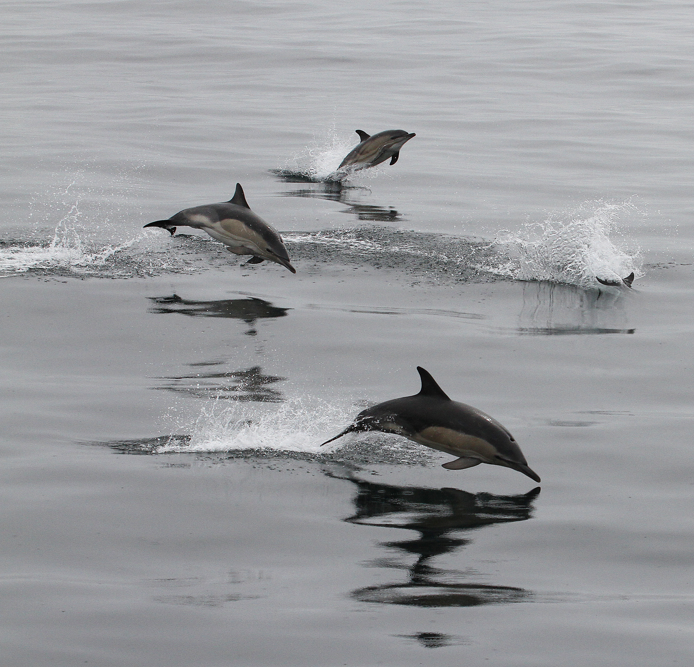 Fancy some spectacular whale and dolphin spotting? Head to the coast this weekend