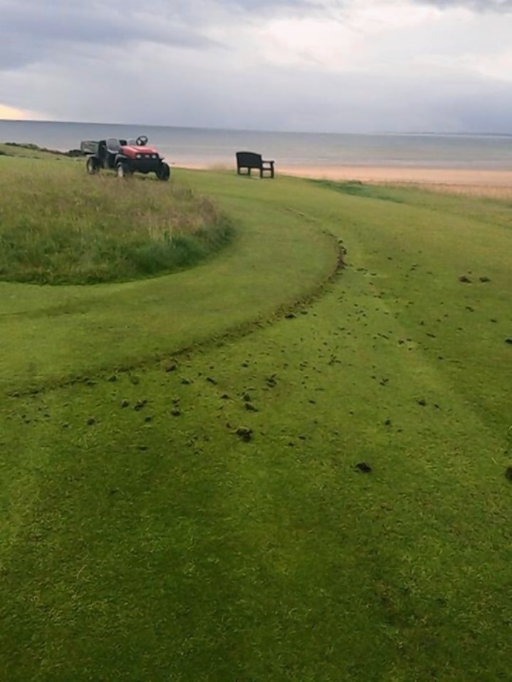 The 16th green at Dornoch was targeted