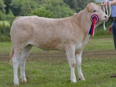 The British Blonde champion