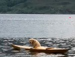 Rosie the Labrador spent half an hour in a kayak and had to be rescued by a rowing boat