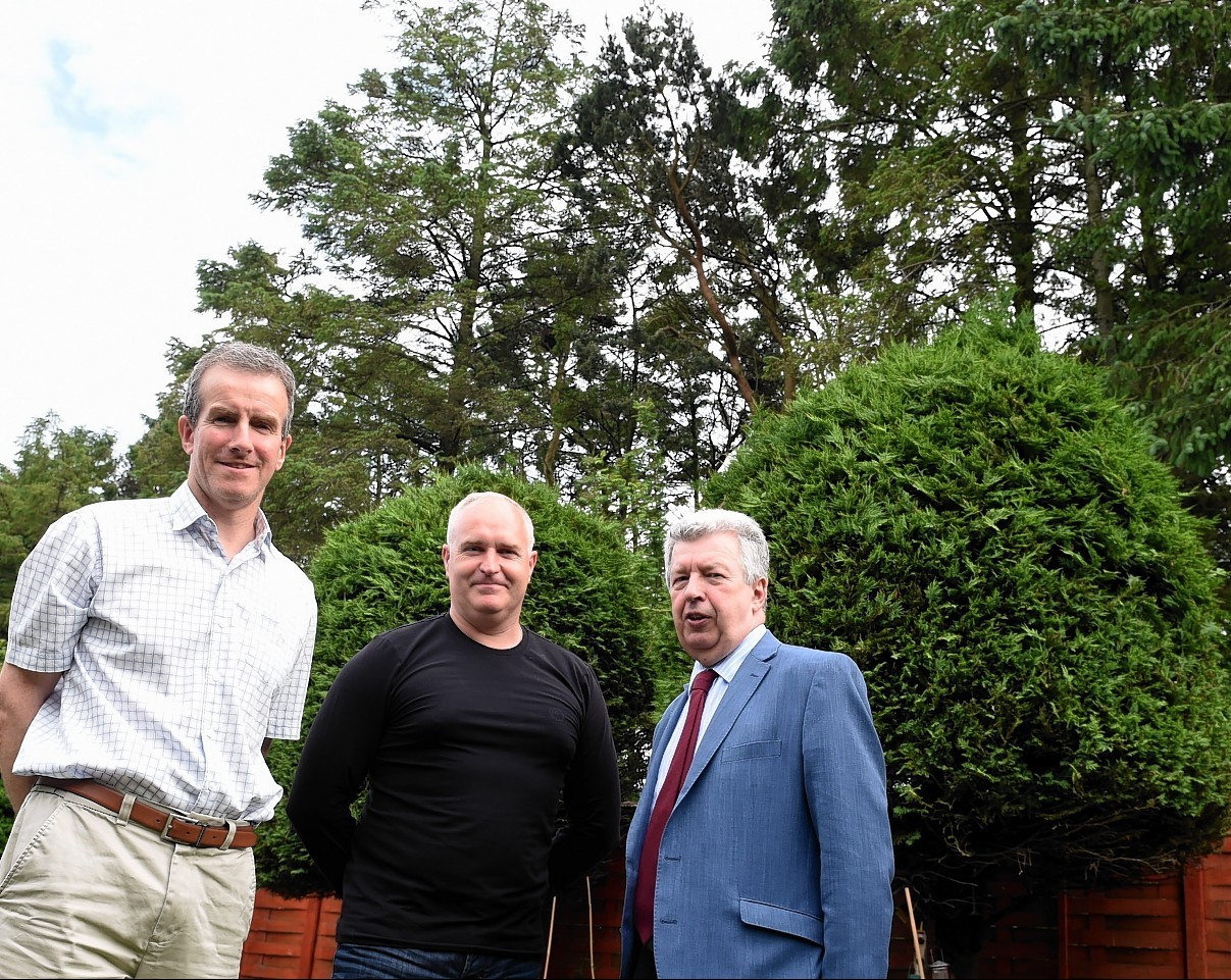 Neighbours claim Mowat Court's towering trees are leaving their homes in darkness
