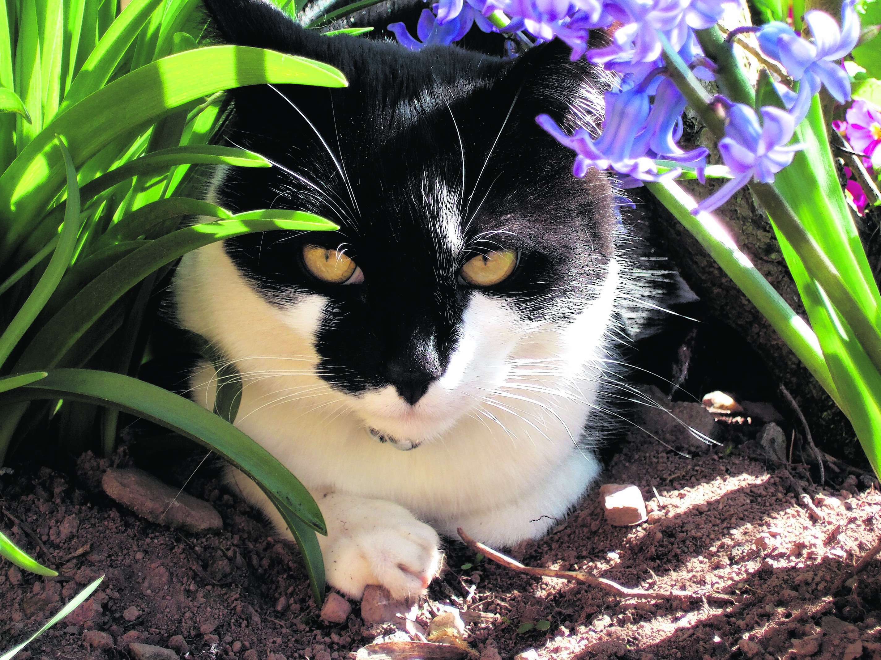 Here is Smudge enjoying the spring sunshine.  He lives with Alexis and Duncan Henderson near Laurencekirk. He is our winner this week.