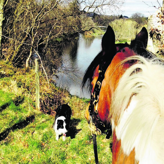 Jackson the horse and Lexi the border collie are best friends to Carol Henderson of Kemnay.