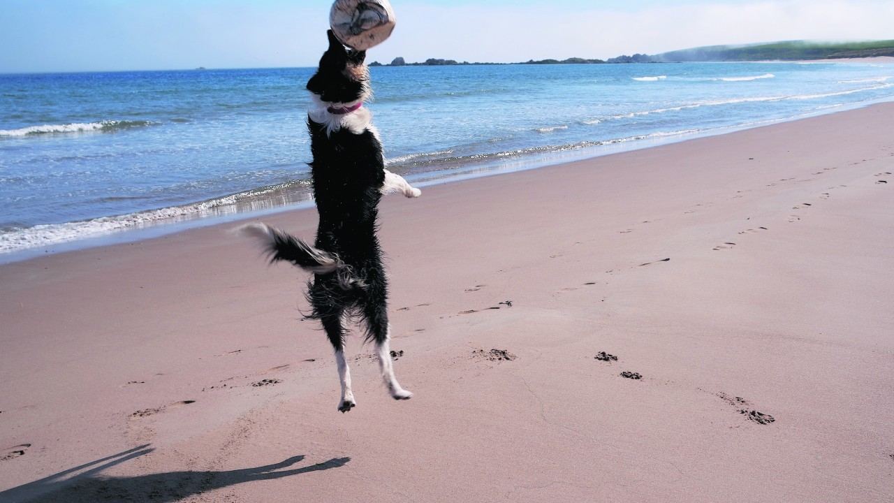 Robbie is 18 months old and loves to play with a football. This picture was taken by his owner, Katie Emslie, who he lives with in Cruden Bay.