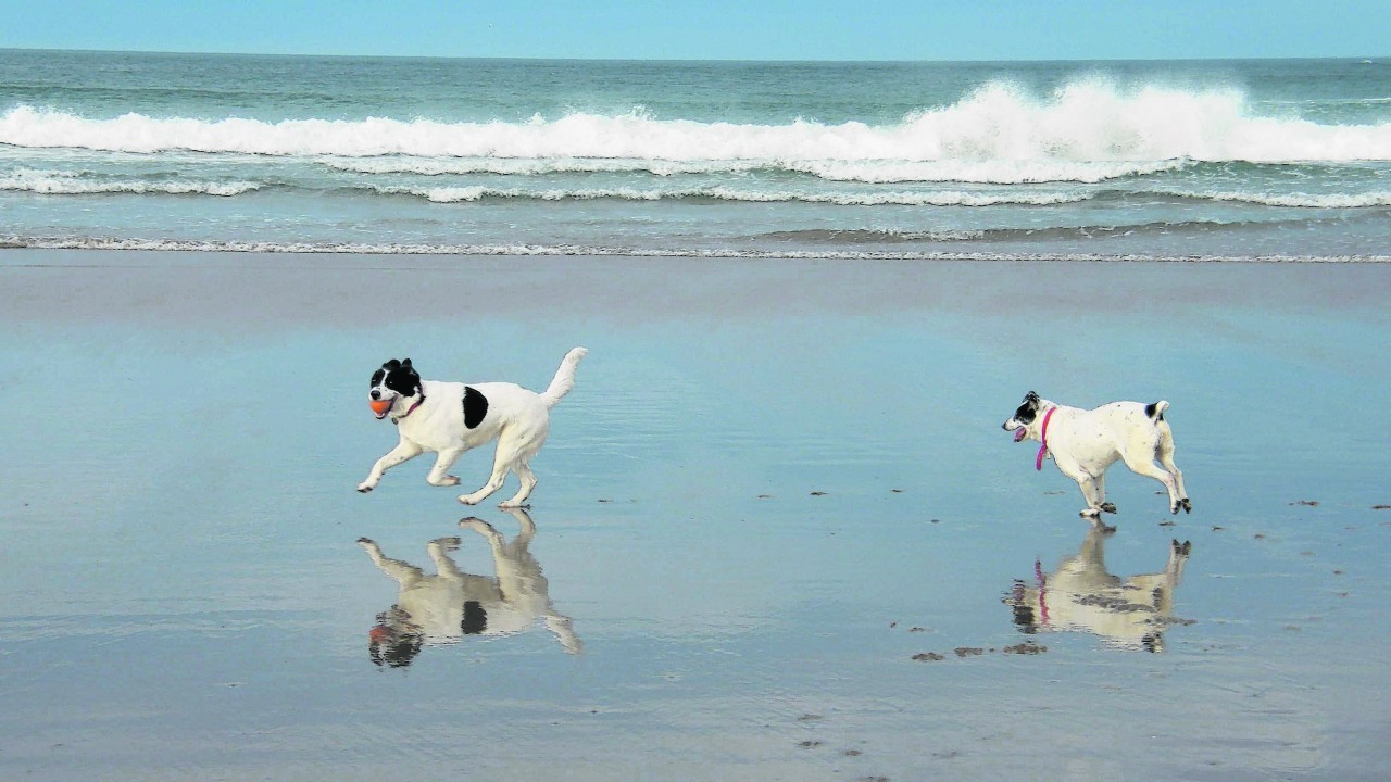 This is Cassie and Lottie enjoying playing with a ball on Banff beach. They live with David and Heather Strathearn near Fyvie.