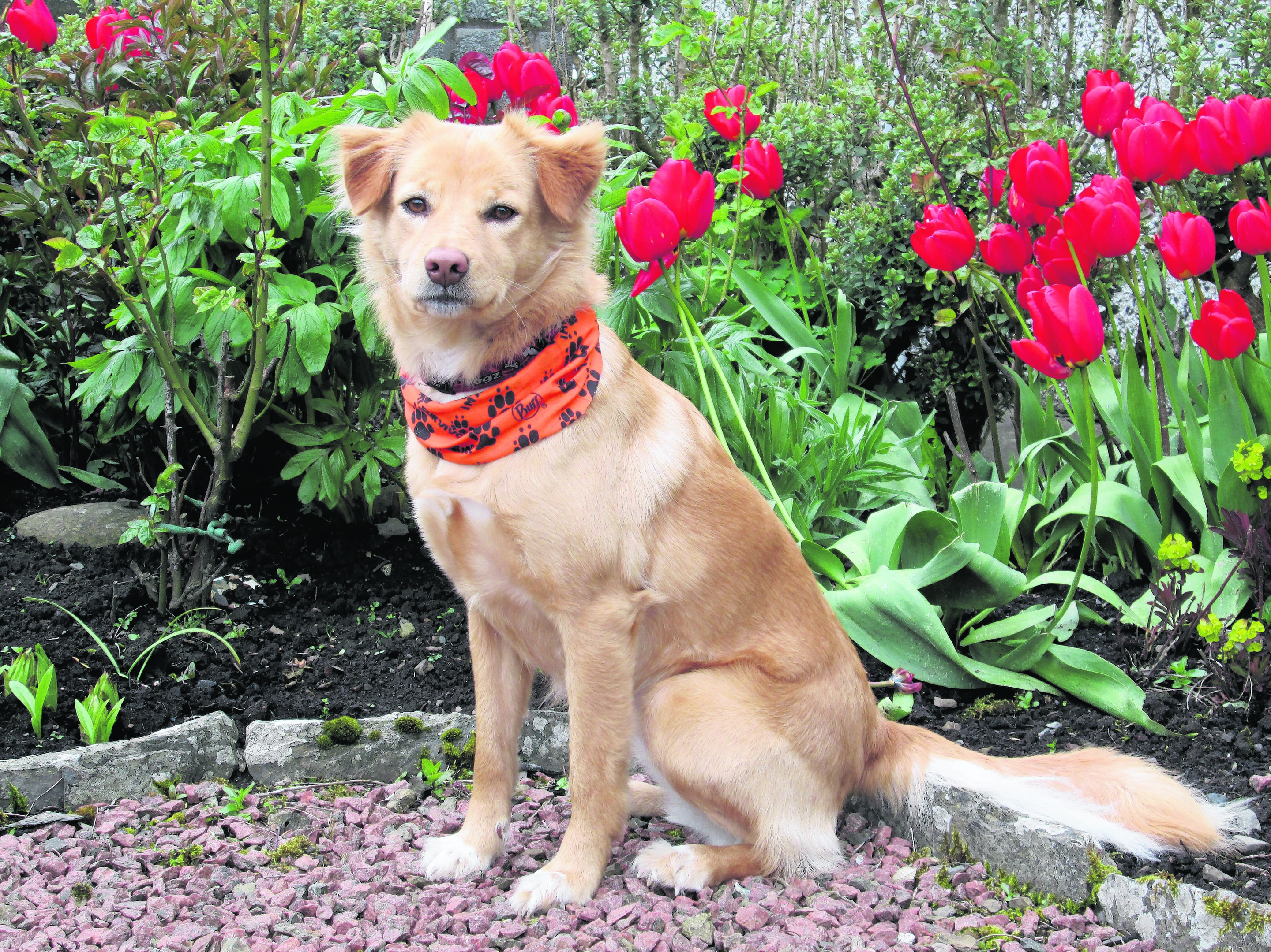 Holly was rescued from Thailand and is now living in Orkney with the Harcus family.