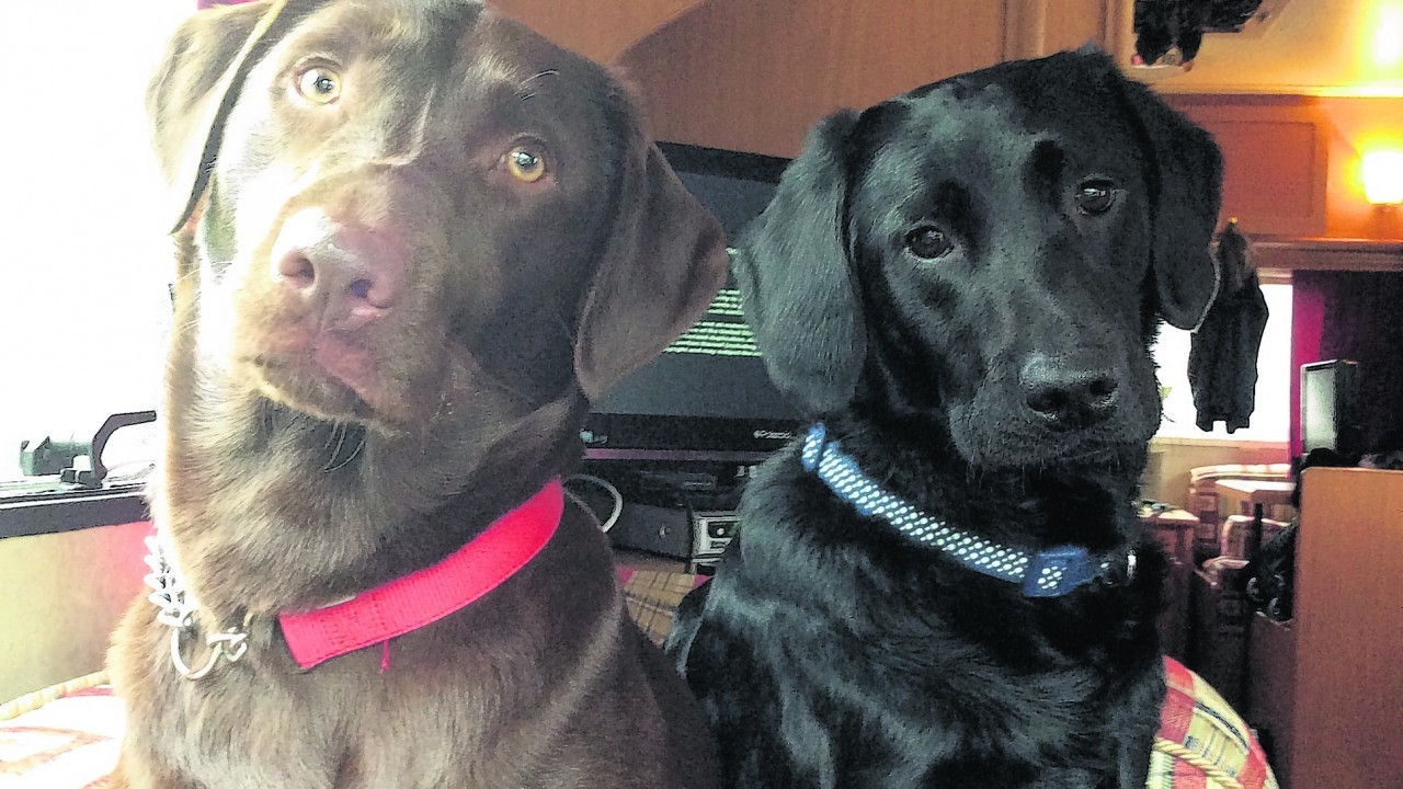 Here are Maisie and Mac waiting to see their Granny in Strontian. They live with Shona Macdonald in Dalry, north Ayrshire.