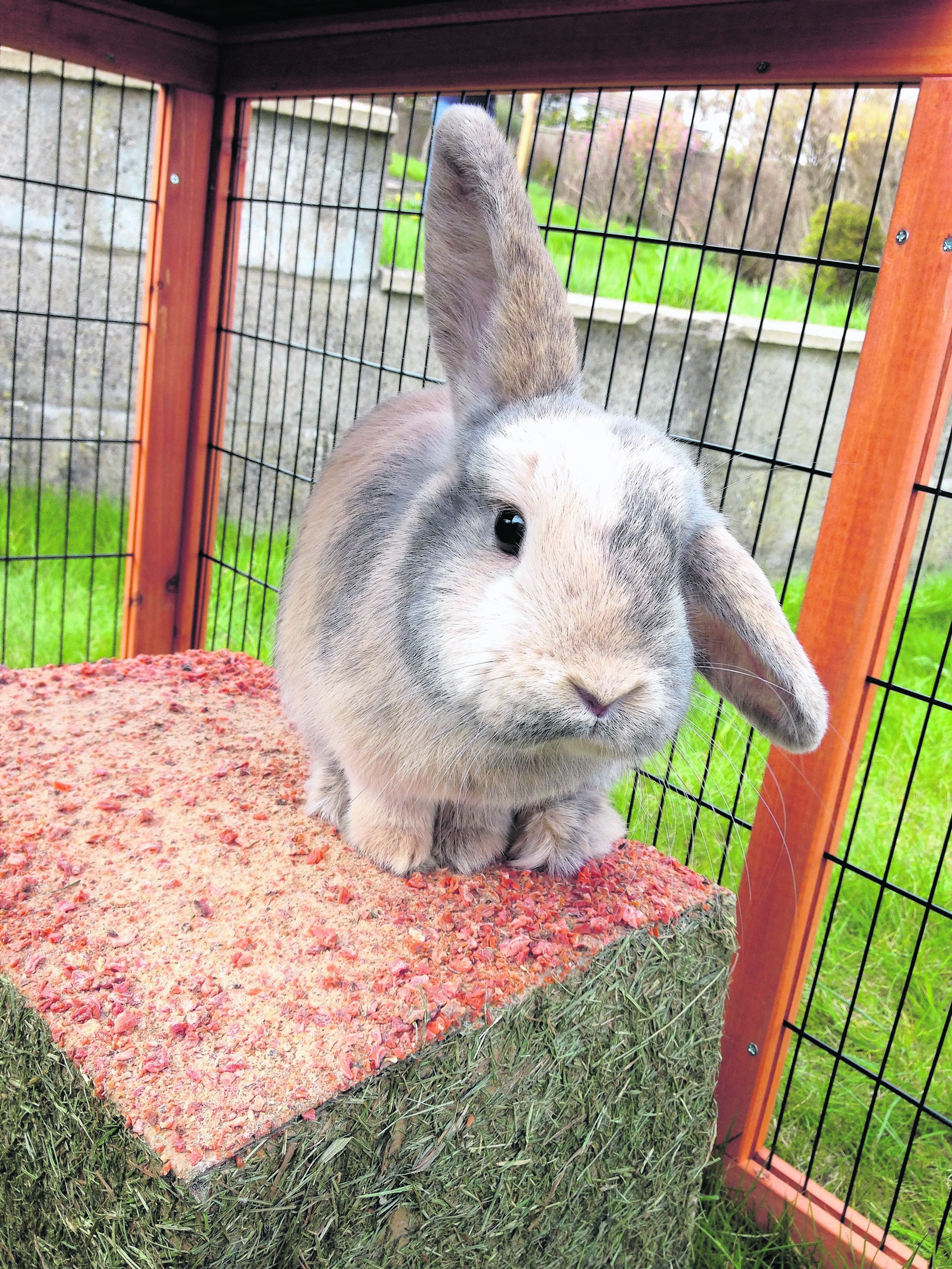 This is Pepper the rabbit who lives with Iris and Zander Main in Newtonhill. Pepper is our winner this week!