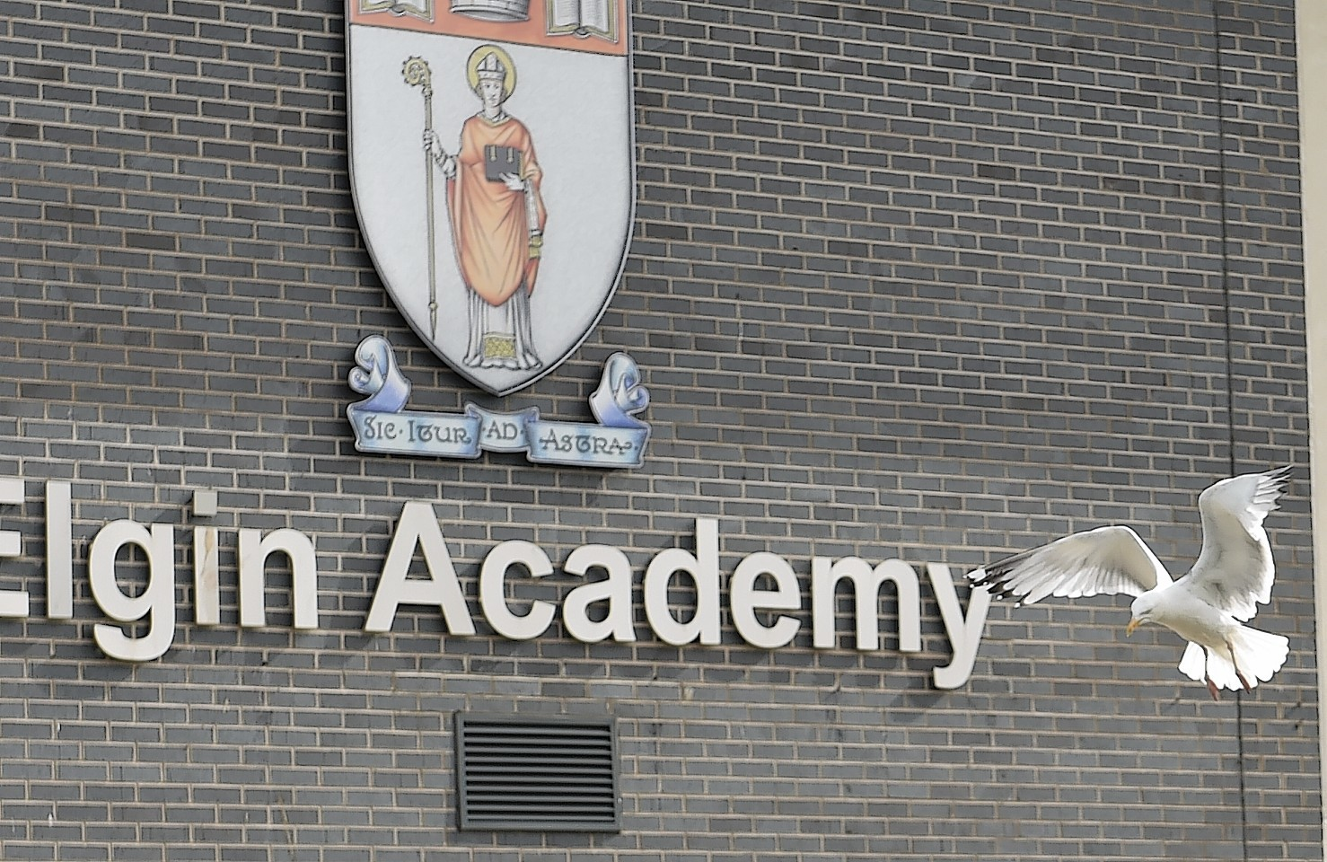 A gull flies in front of Elgin Academy. Picture by Gordon Lennox