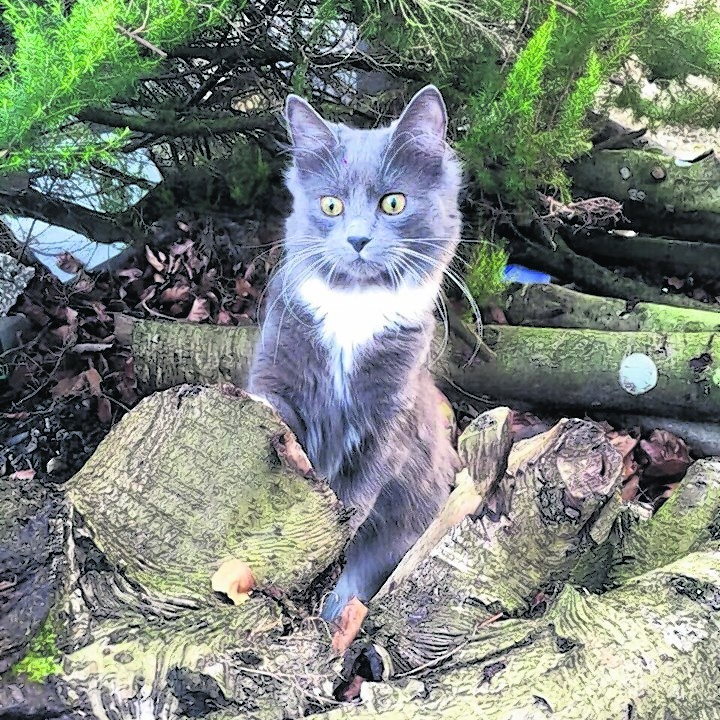 This is eight-month-old Millie out exploring the garden for the first time. She lives with The Jarvis family in Mintlaw.