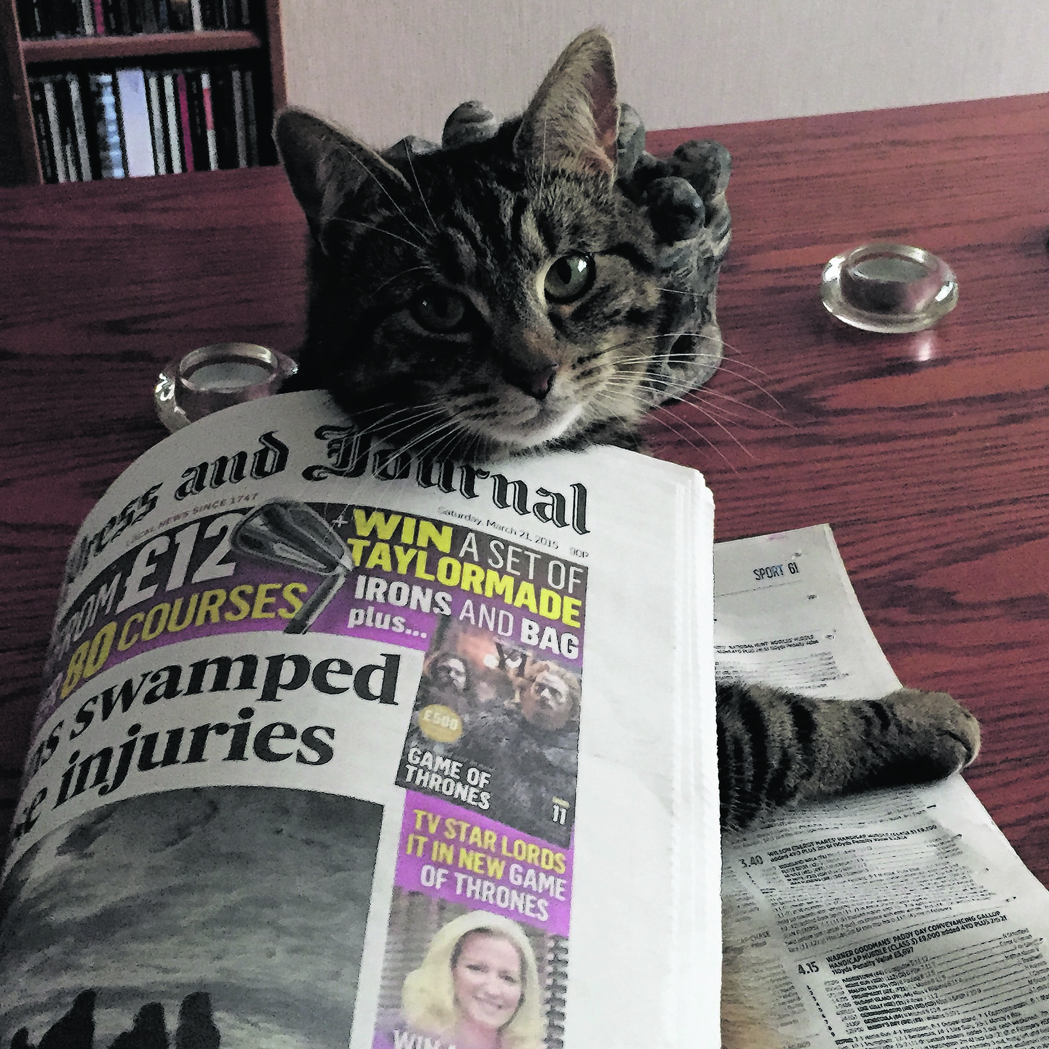 Tilly reading the P&J. She lives with Paul and Katrina in Aberdeen, and is our winner this week.