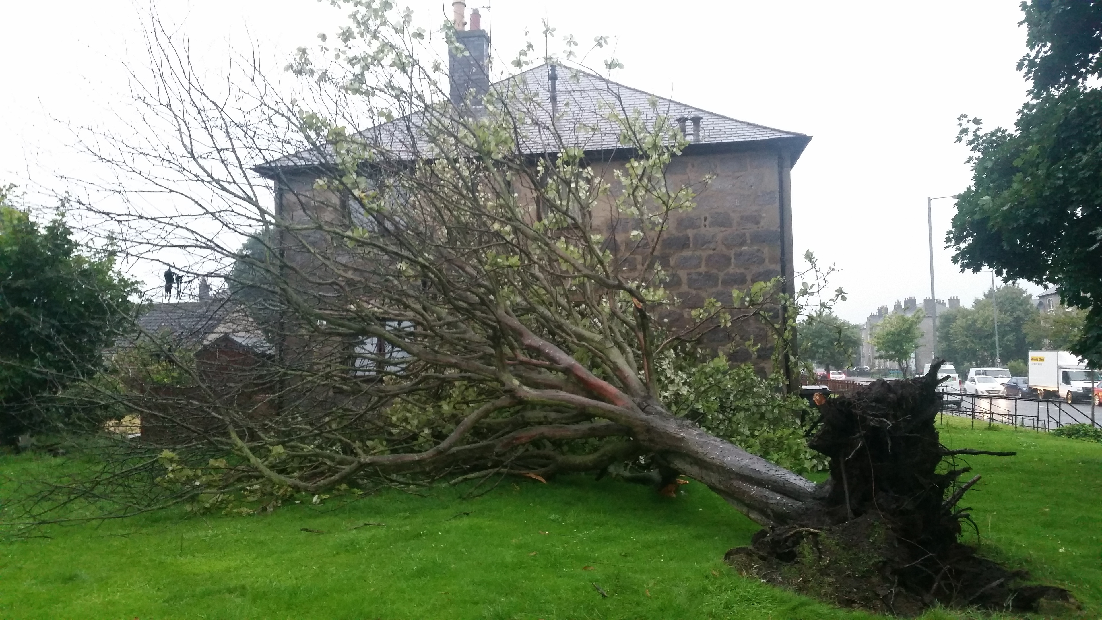 A woman is trapped in her home after the tree fell
