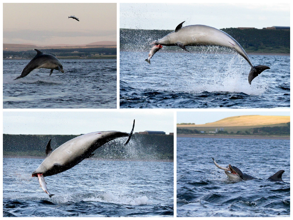 Mr Kemp captured a number of stunning pictures of the dolphin