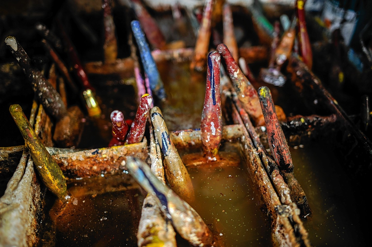 Paint brushes sit in water at the yard