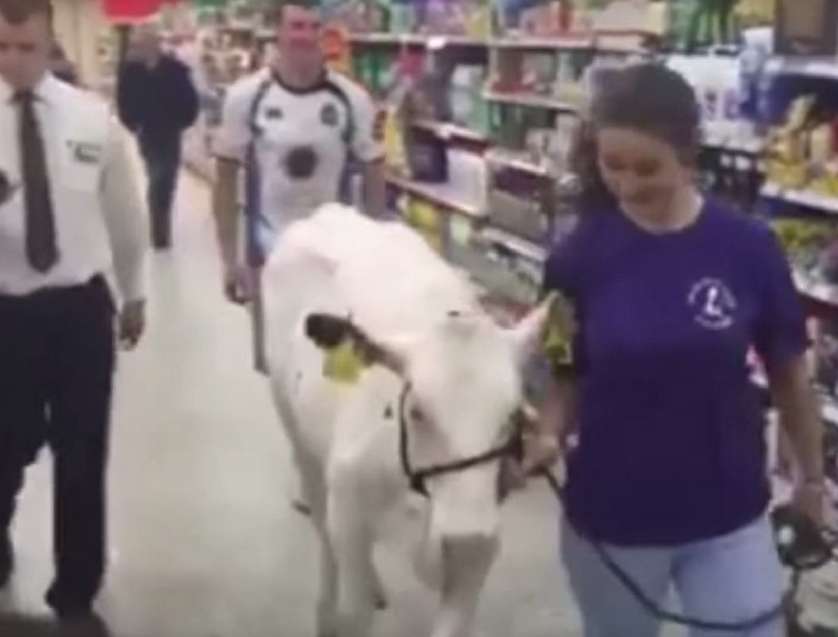 The cow was taken through the supermarket in Dumfries and Galloway as part of the protest