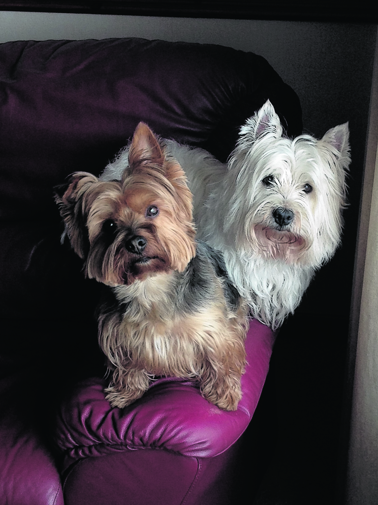 This is Rory Thomson and Toby Davison, best friends, at Burnside, Thurso, Caithness. Toby lives with Sharon Davison and Rory lives with Sharon and Iain.