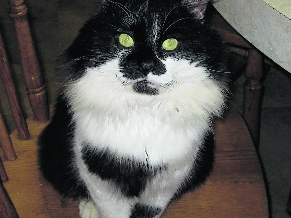 Sylvester lives with the Naylor family in Memsie.