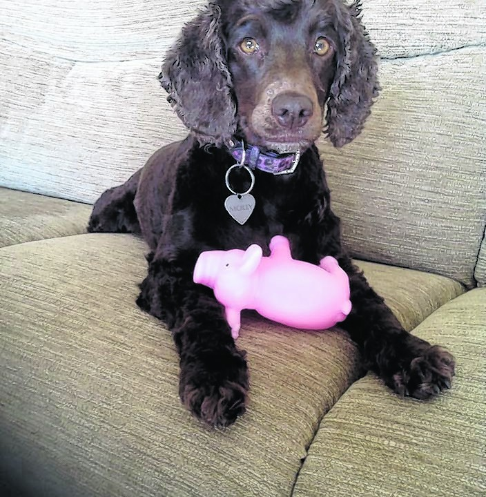 Here is Molly celebrating her fourth birthday. Molly lives with Lewis Skinner in Crossfields, Turriff.