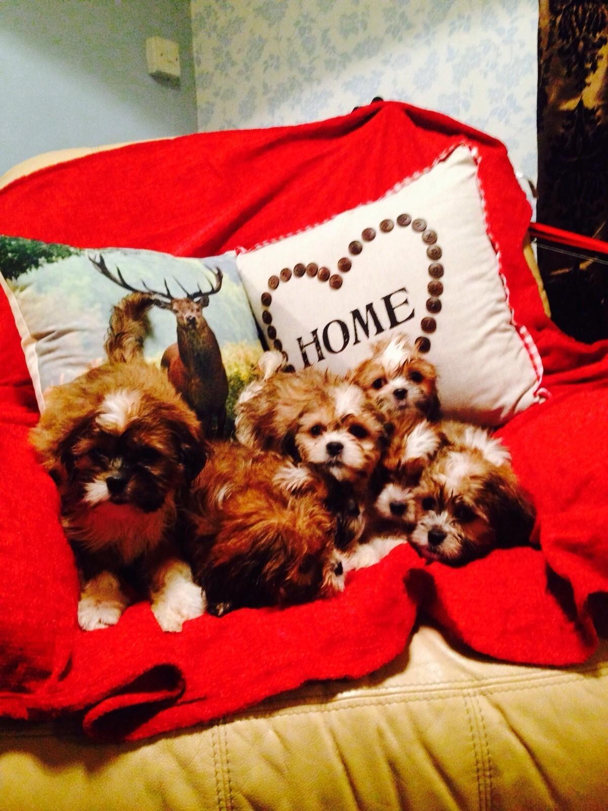 Puppies stolen