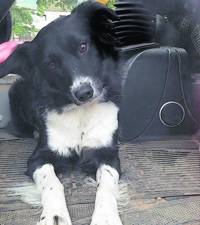 This is Emmy the Border Collie in the digger. She lives with Kevin Lorraine Sharon and Louise in Macduff.