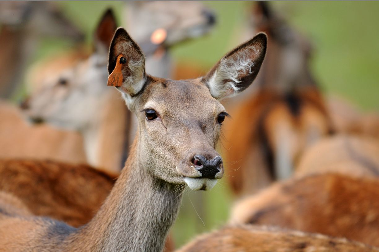 The funding is designed to help new and existing deer farmers.