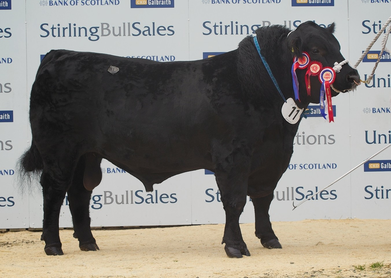 The 20,000gn Aberdeen-Angus sale topper