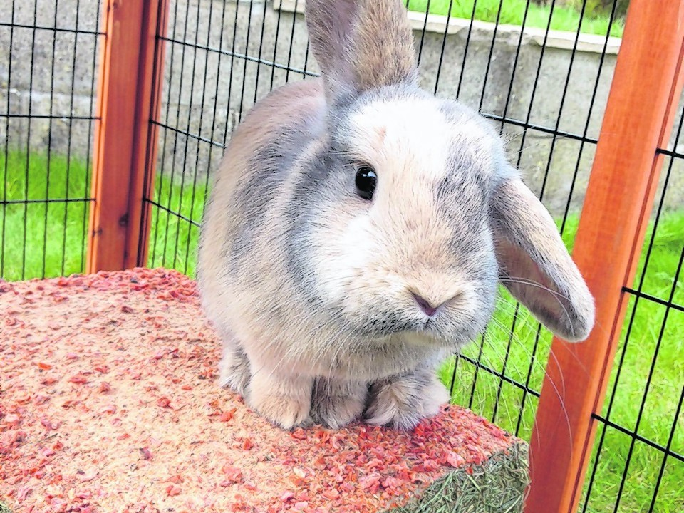 Pepper the rescue rabbit lives with Iris and Zander Main in Newtonhill.
