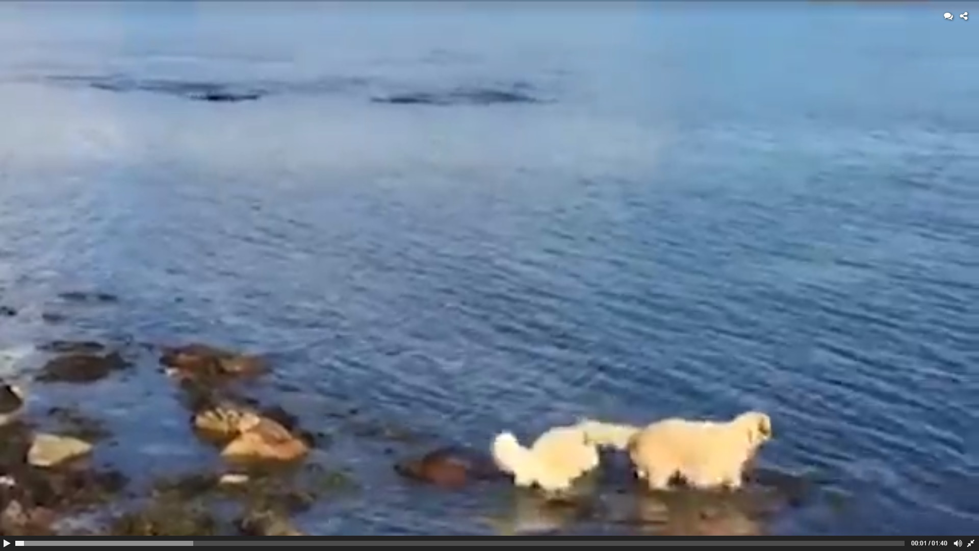 The dogs jump in and play with their flipper friends