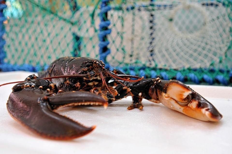 Much of Scotland's shellfish ends up in mainland European markets