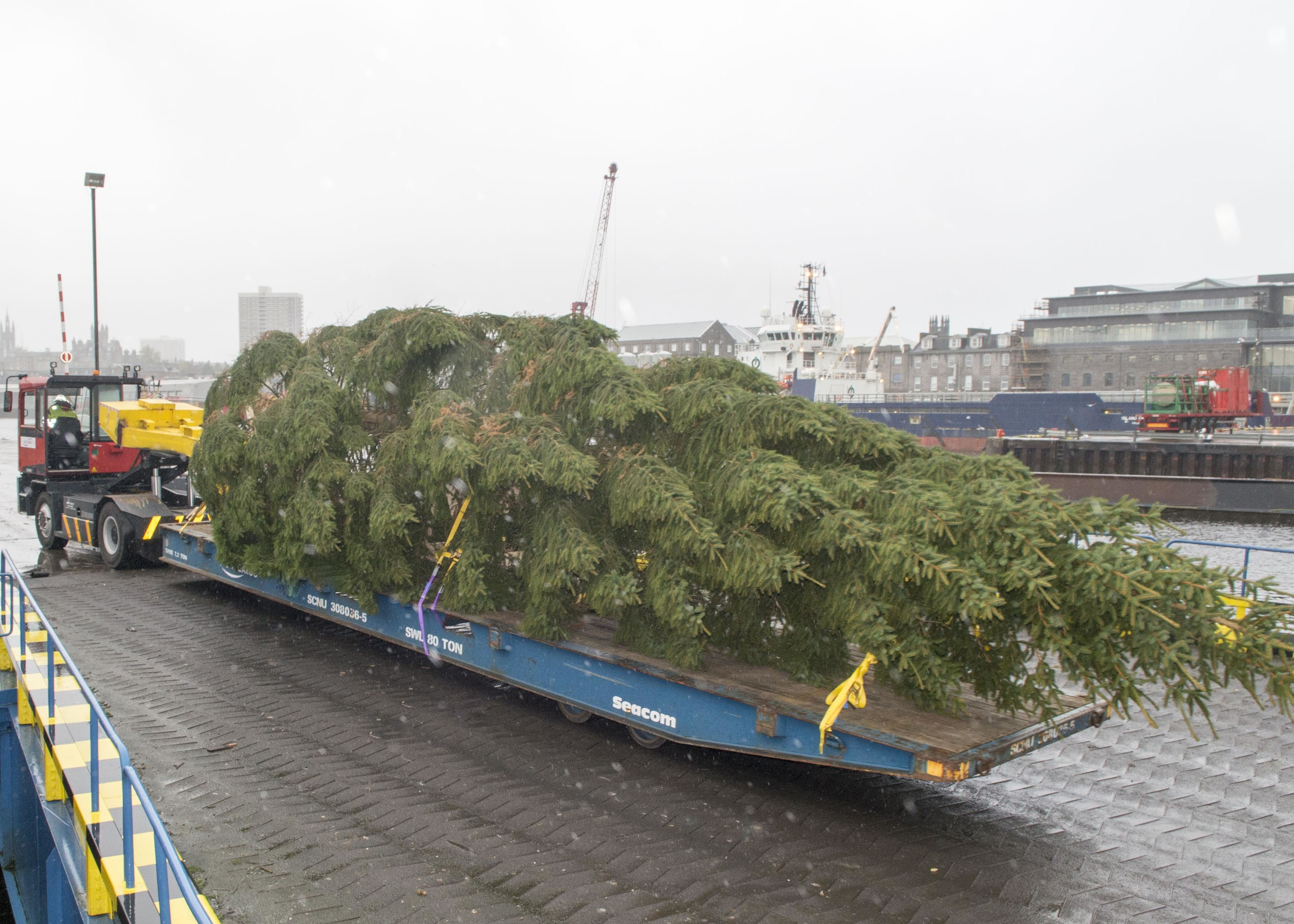 15/11/15 Aberdeen Christmas tree a gift from Stavanger arrives in city