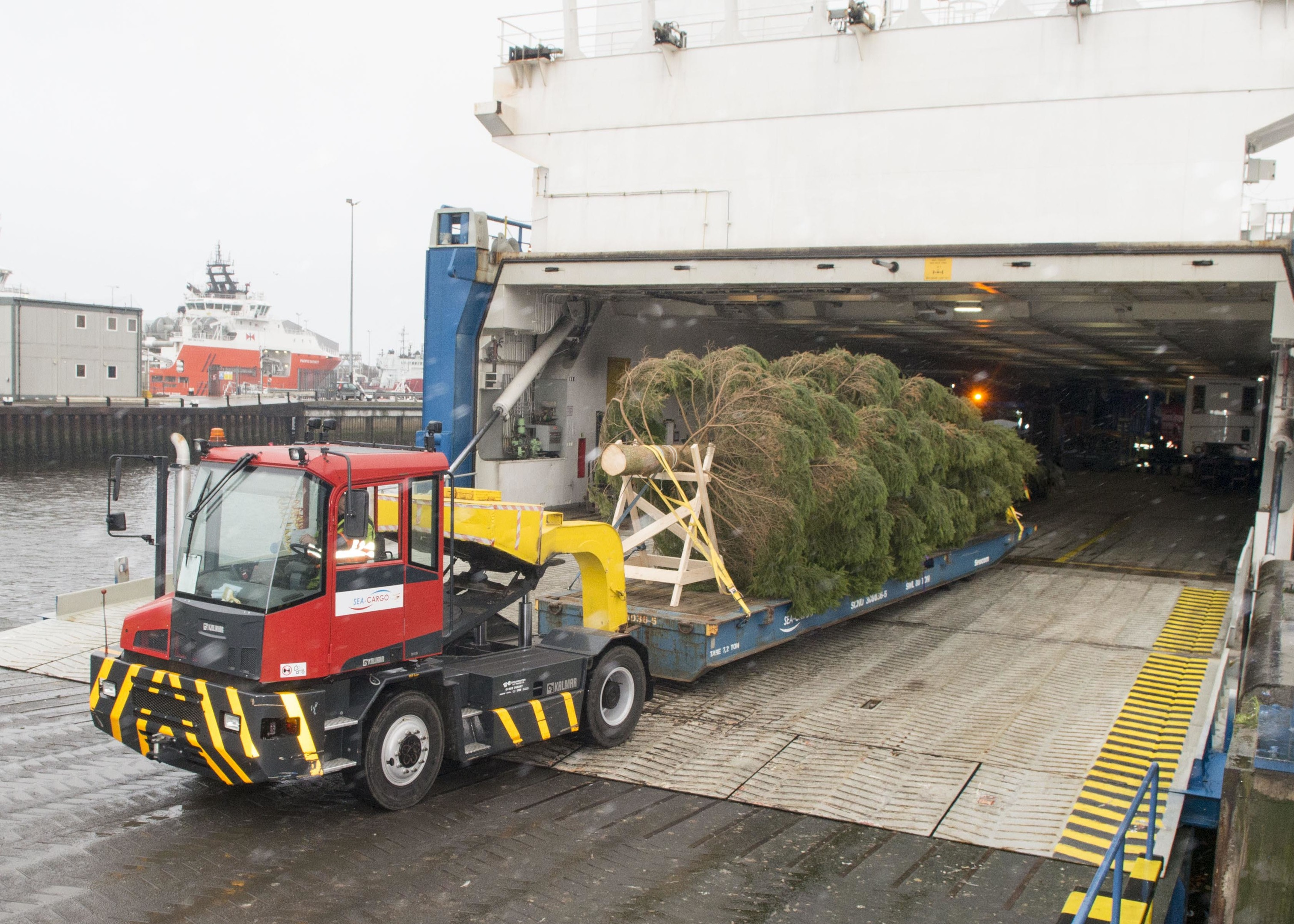 The Christmas tree completes its journey from Norway to Aberdeen. Picture courtesy of Norman Adams, Aberdeen City Council