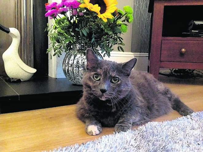 Moonie the 14-year-old rescue cat from Aberdeen.