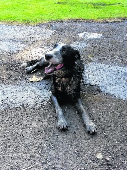 Harry... or Dirty Harry as he might be better named after cooling down in a muddy pool lives with John, Gill and Max in Rosehearty.
