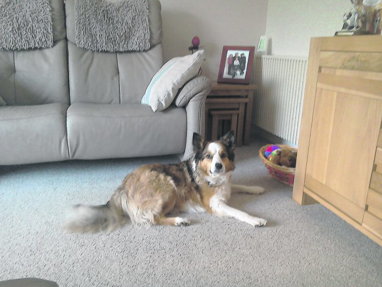 Milly the border collie lives with Yvonne and Doug in Inverurie.