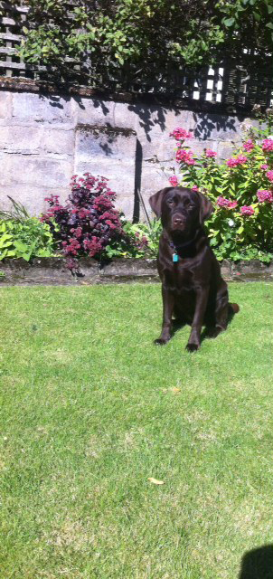 This is Kola on holiday in Ballater, she stays with Barbara in Banchory.