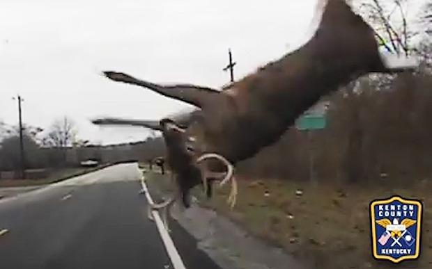 The deer flies through the air