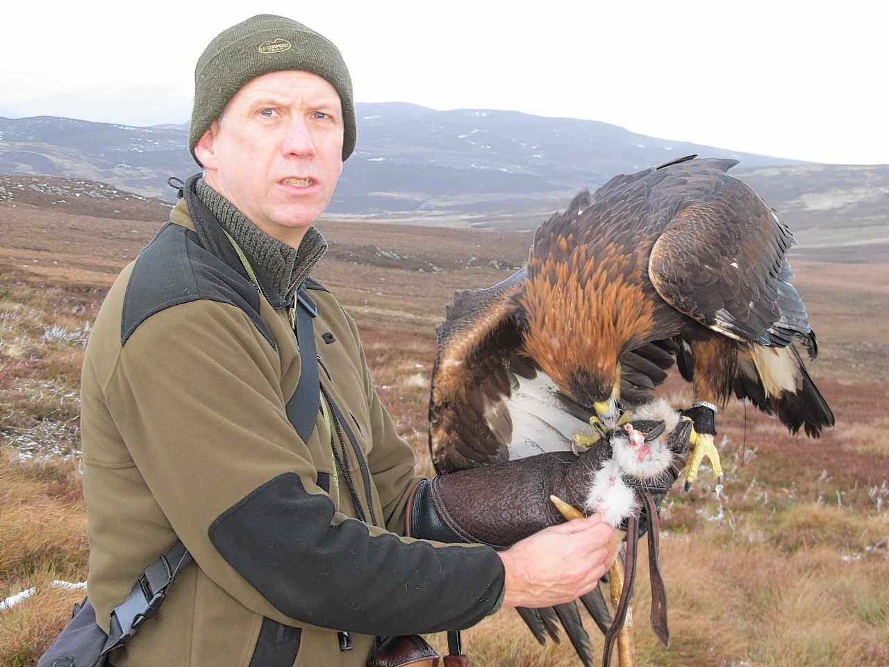 Les Gibson with his golden eagle Odin