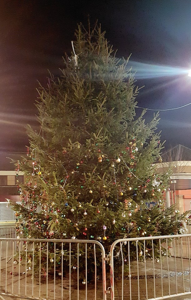The tree after it was hit by vandals