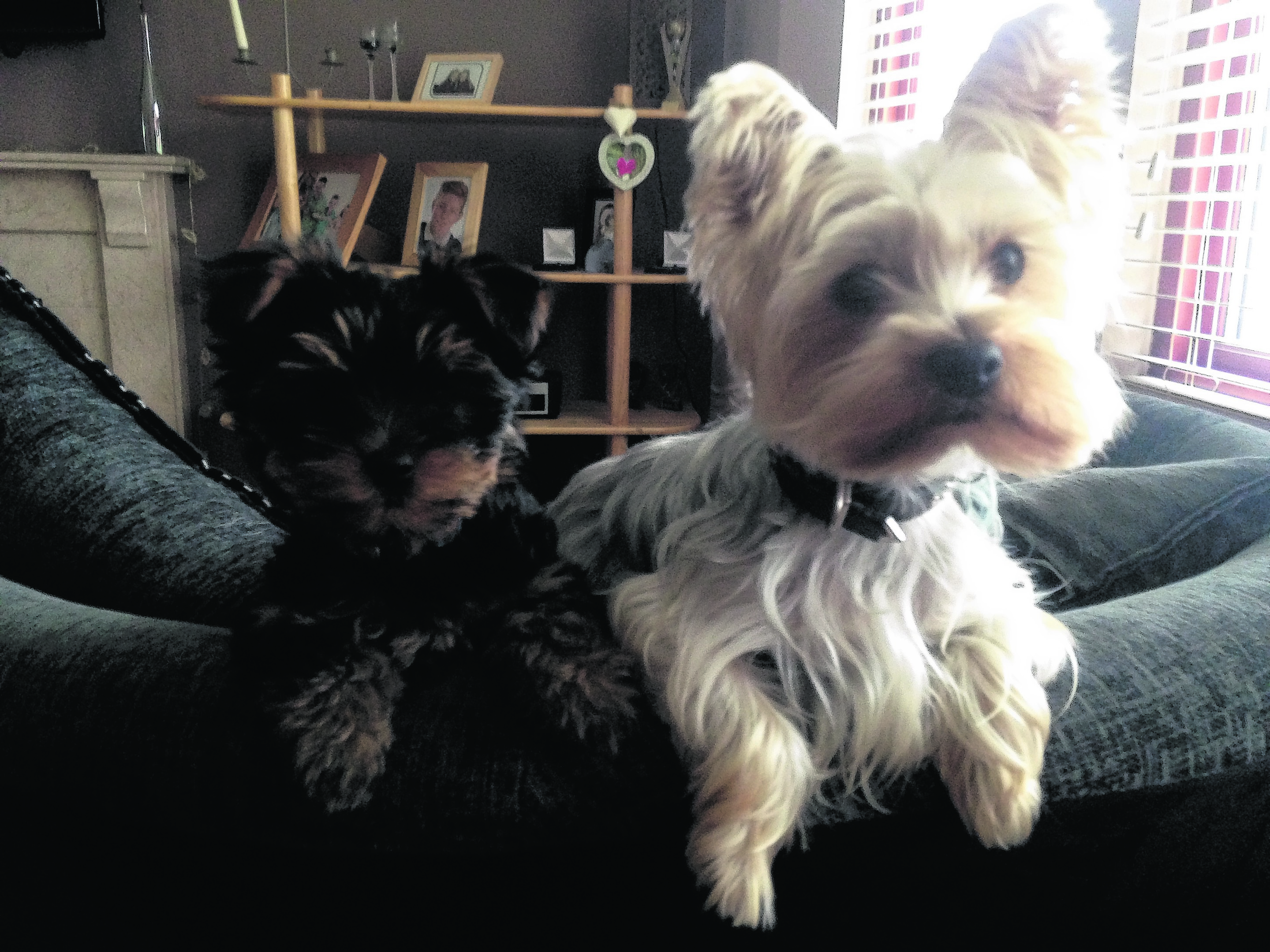 This is Daisy and Barney who live in Alford with the Taylor family. Daisy is our winner this week