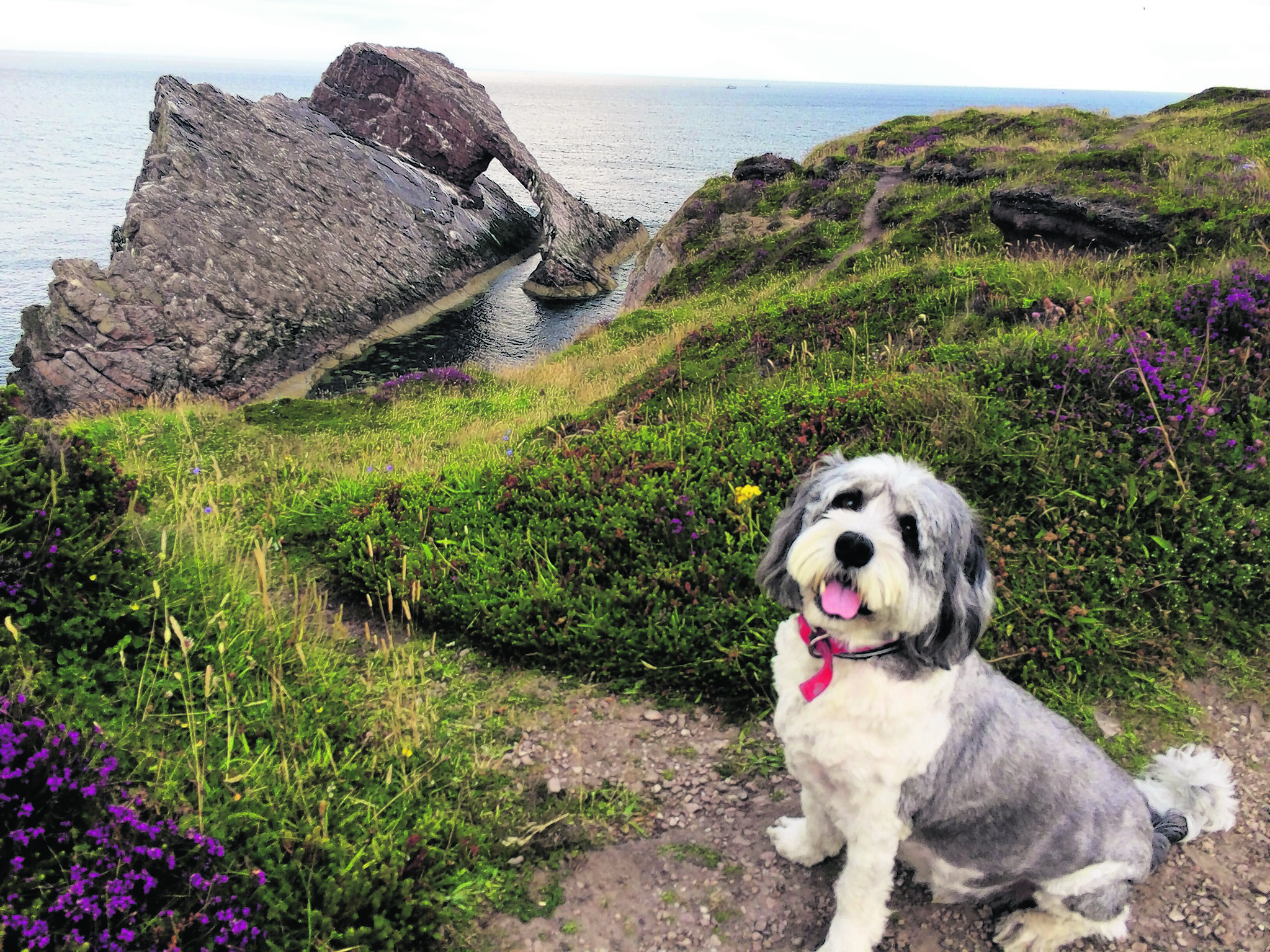 Here is Jenson by the Bow Fiddle Rock in Portknockie.
